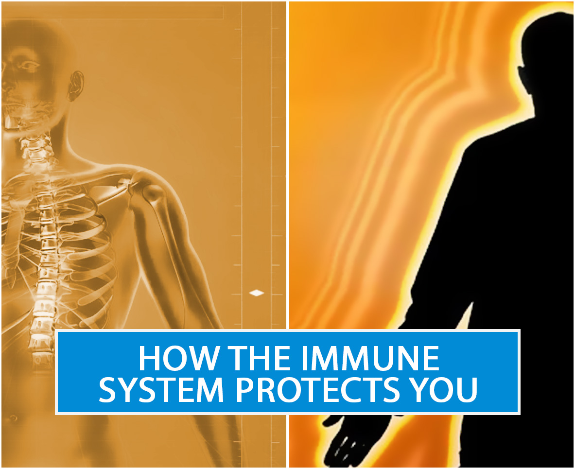 How The Immune System Protects You